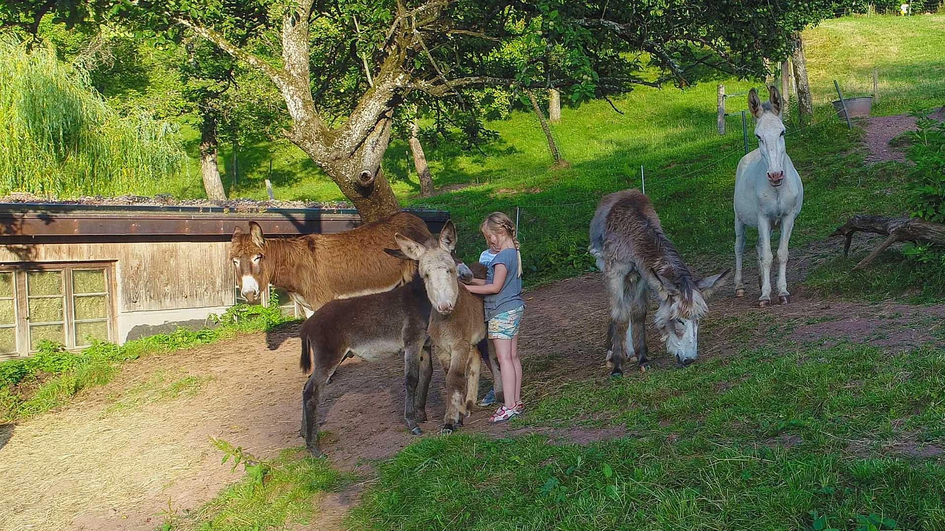 Ferienhaus am Schönwasen - Kinder mit Eseln