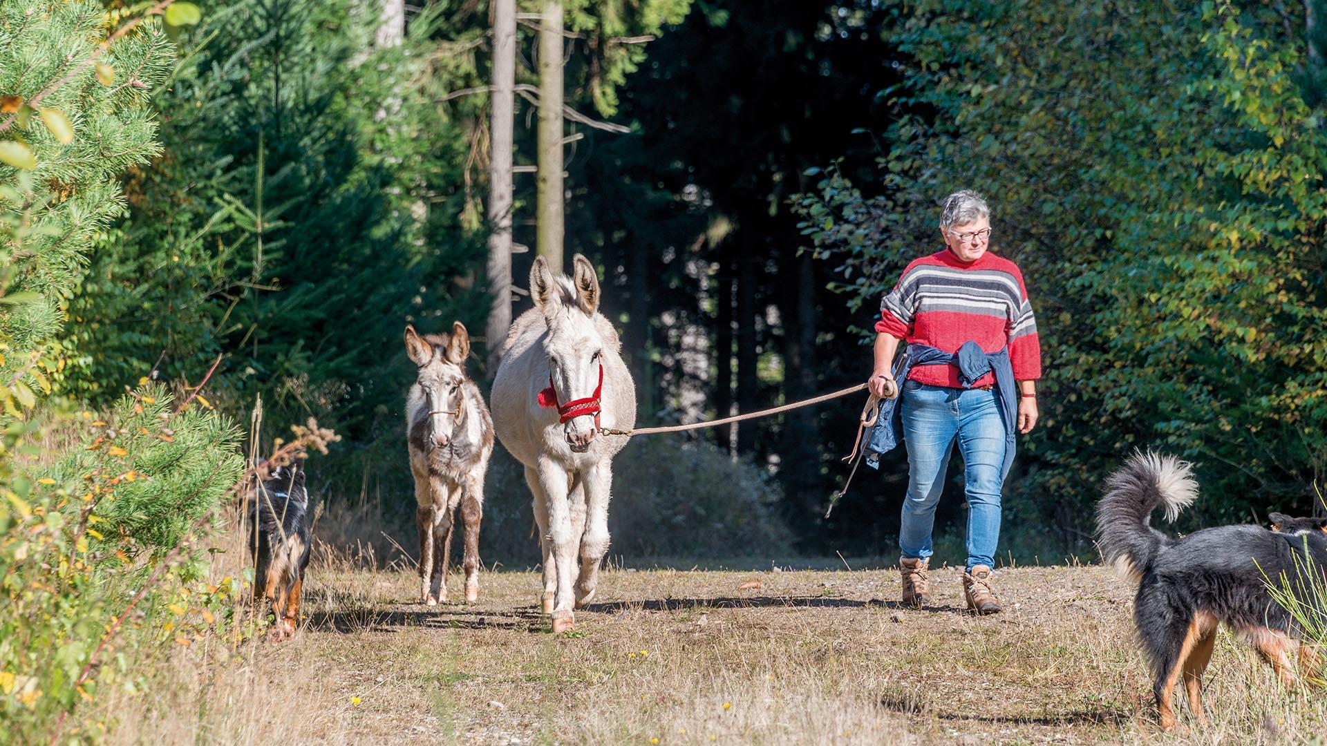 Ferienhaus am Schönwasen - Eselwanderung