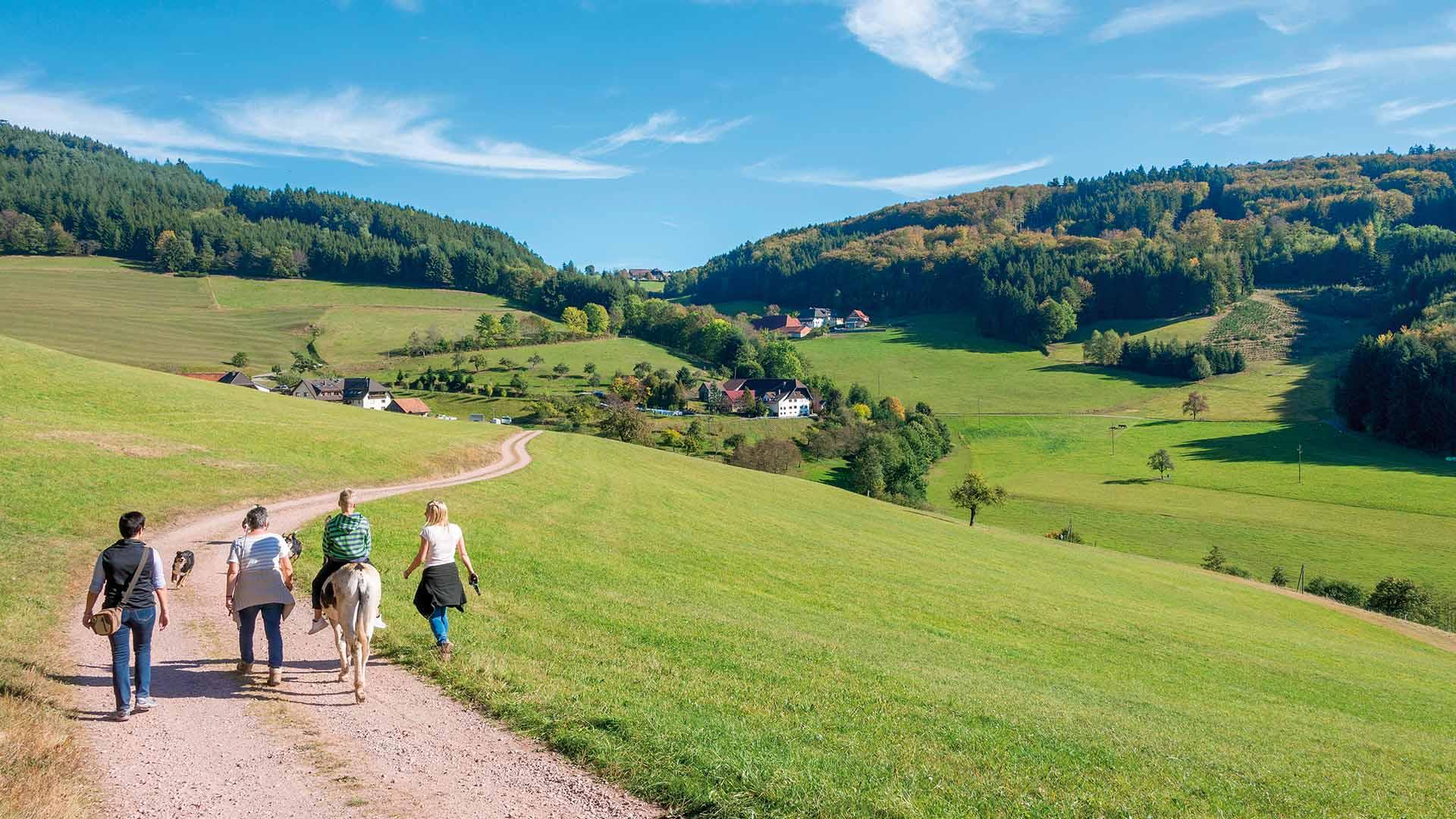 Ferienhaus am Schönwasen - Wandern in der Natur